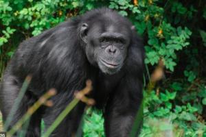 ewolucja od małpy
